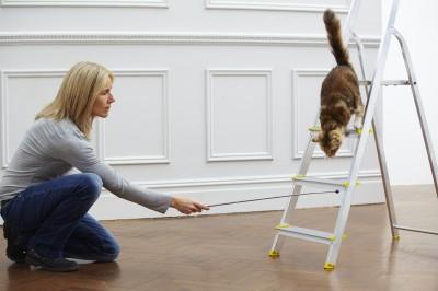 You CAN clicker train a cat