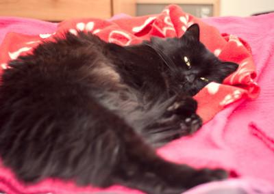 Annie taking a catnap
