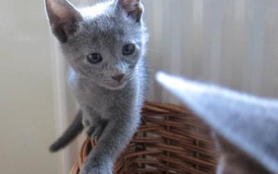 GiGi as a little kitten