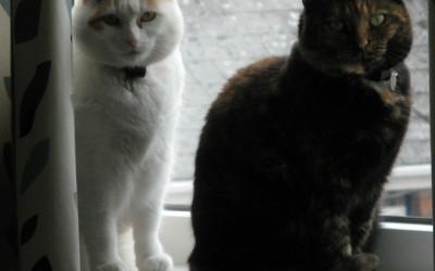 Millie & Hattie